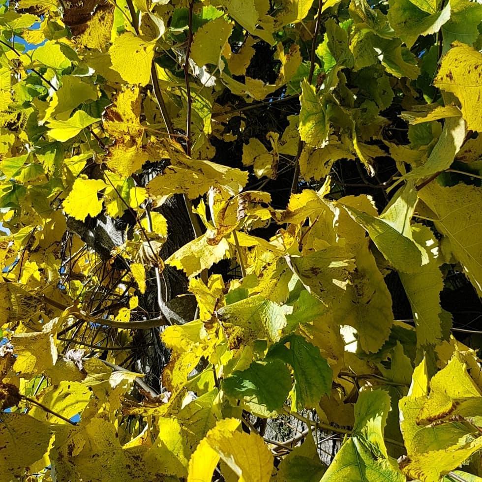 cagliostrino  Autunno Finalmente ua pausa di sole in quest'interminabile racconto di pioggia. ... autunno cagliostrino casacagliostrino casanelbosco ermete instaartist instalovers instautumn