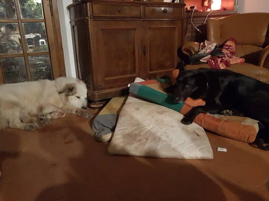 """cagliostrino Classiche dinamiche fraterne: Pazuzu: """"È tutto mio!"""" Odino: """"Fingo di dormire e... cani caniegatti caniprotagonisti casacagliostrino dogoftheday dogs_of_instagram instaaddicted instalovedog lovemydog"""
