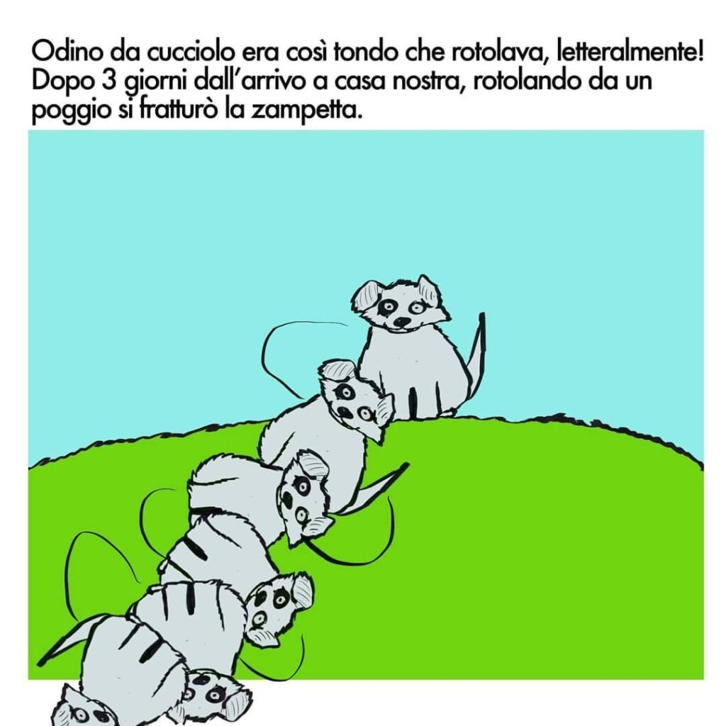 instablog Vita a Casa Cagliostrino: l'infanzia di Odino ... cagliostrino cani caniegatti vignetteveloci