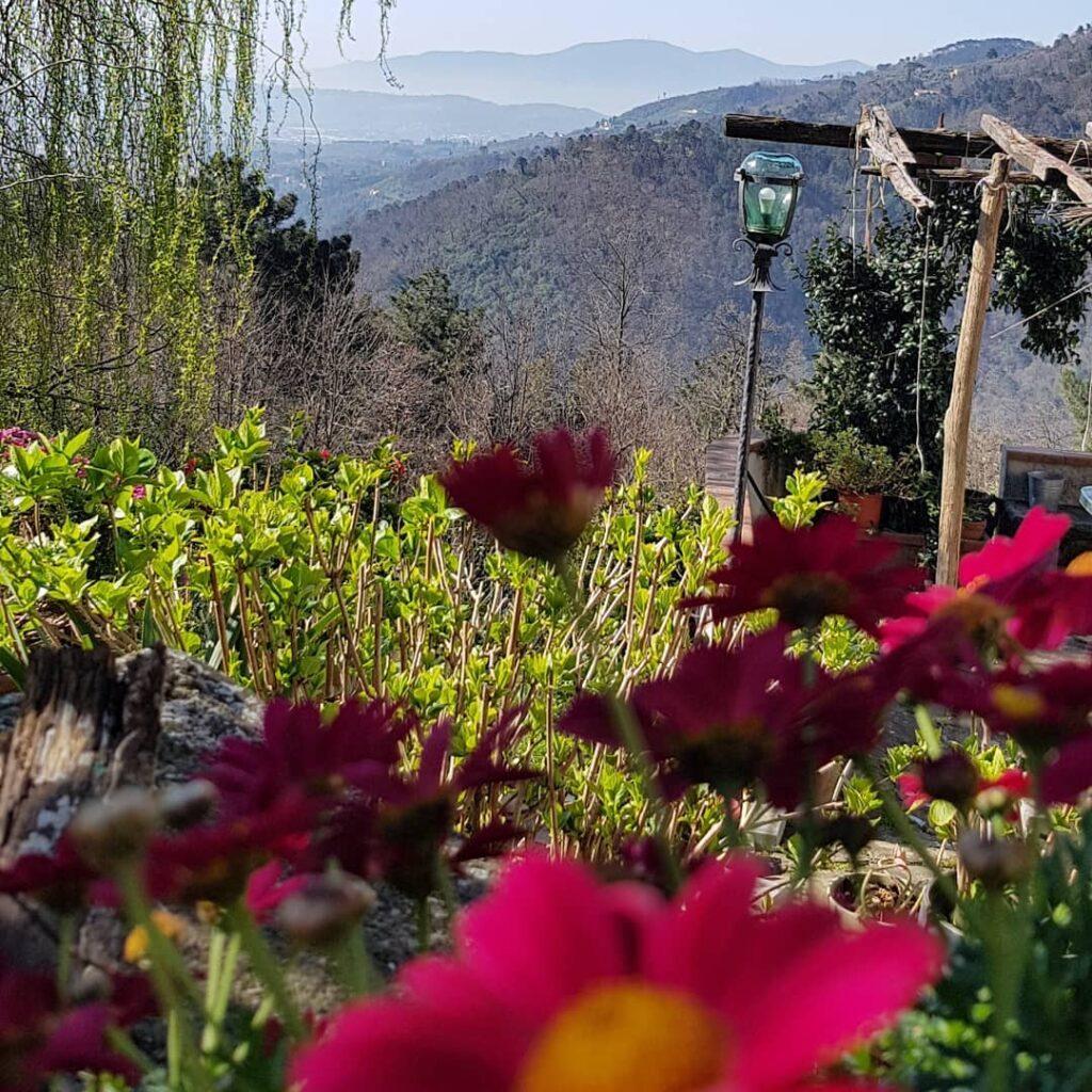 cagliostrino La bellezza cura l'anima ... casacagliostrino fiori instagarden mastinopirenei natura pastoredeipirenei primavera tuscanylifestyle