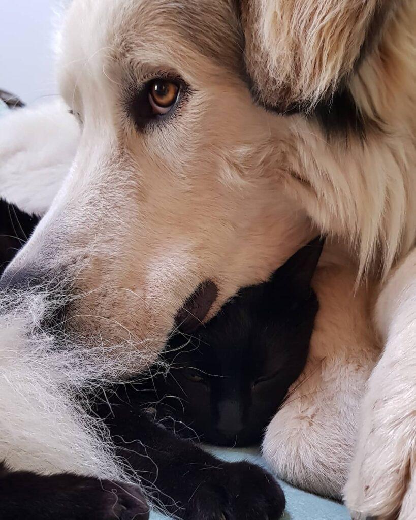 cagliostrino Odino e Cagliostro IV ... amoreterno casacagliostrino instalovers love loveblackcats lovemydog