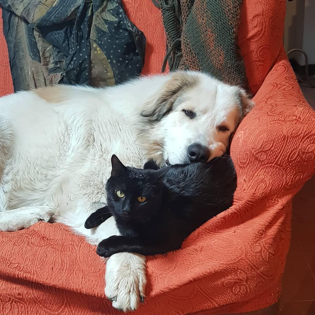 instablog  Vi mando un poco di tenerezza    ... blackandwhite loveblackcats lovemydog